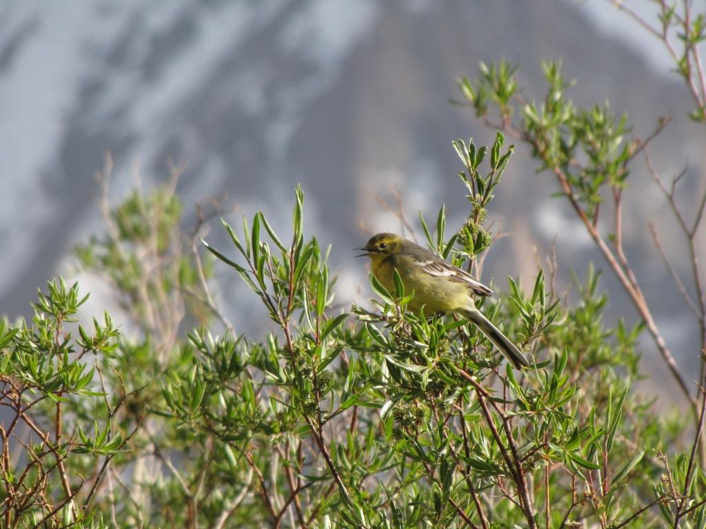 сашино фото птичка на яшилькуле