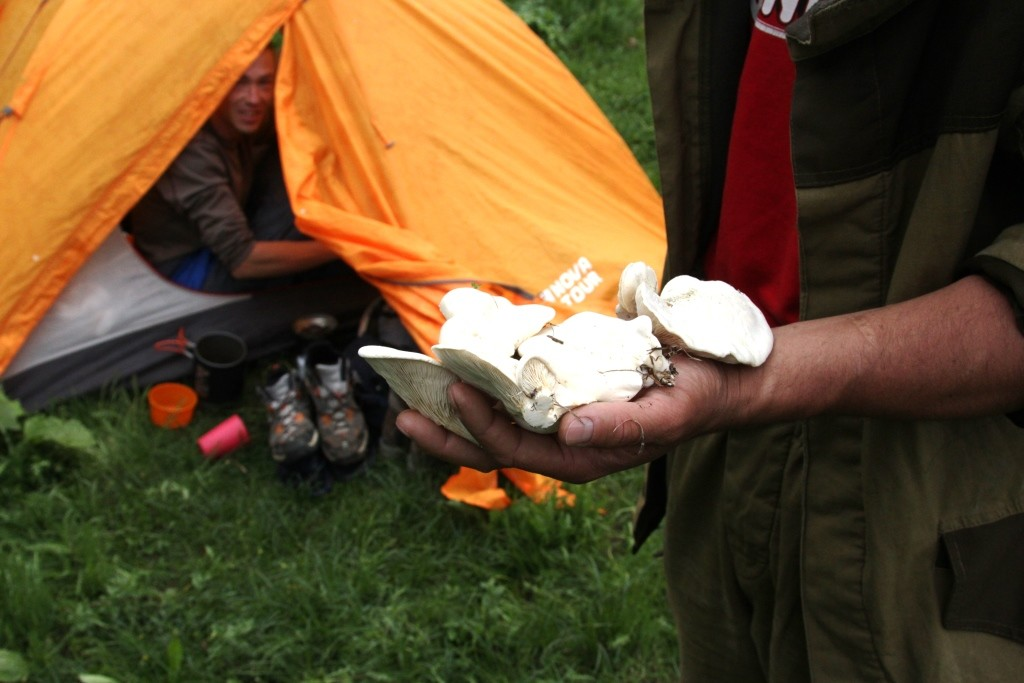 26 Tajik Mushrooms