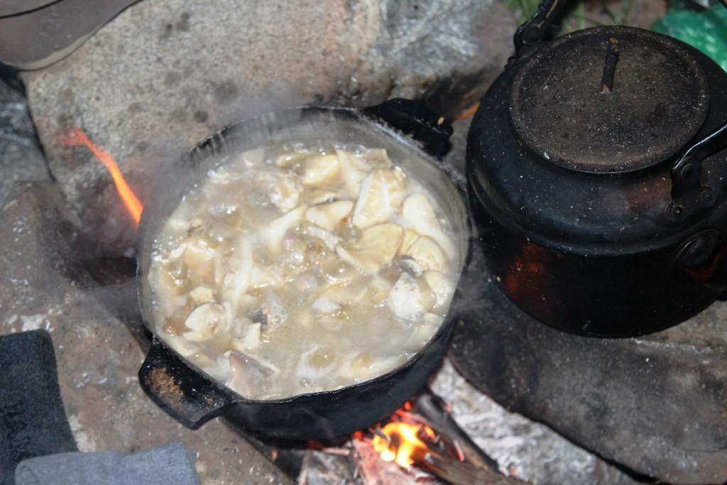 27 1 Tajik Mushrooms