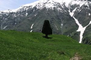 66 Plateau Parmin.